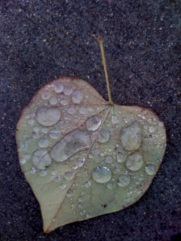 LEAF WITH DEW